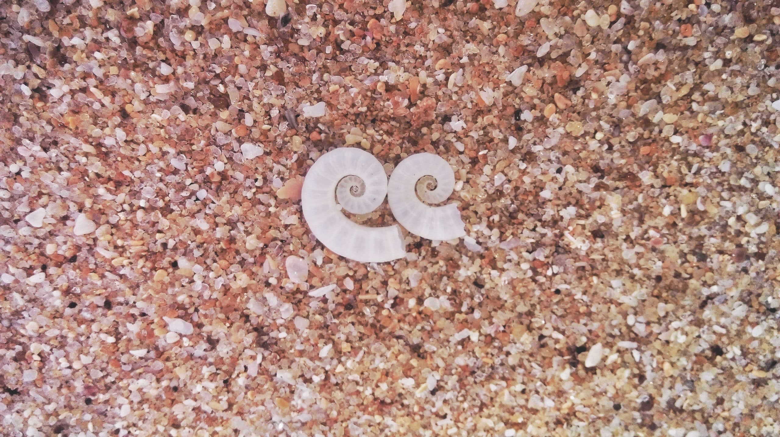 schelpen gulden snede op zand