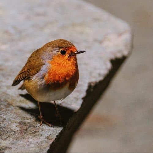 spirituele betekenis vogels uitgelicht